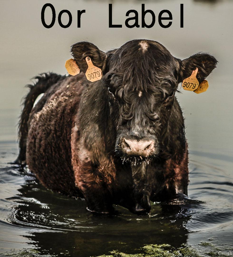 Oor label: Korm Plastics
